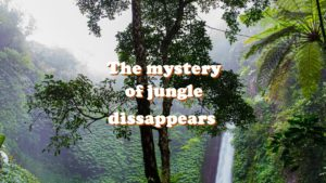 Mystery of jungle dissappears